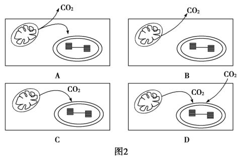 创新设计高考总复习20xx届高考生物第一轮复习方案133能量之源光与光合作用